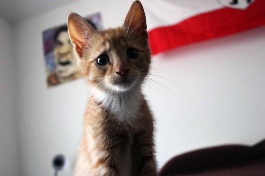 Sad marketer cat