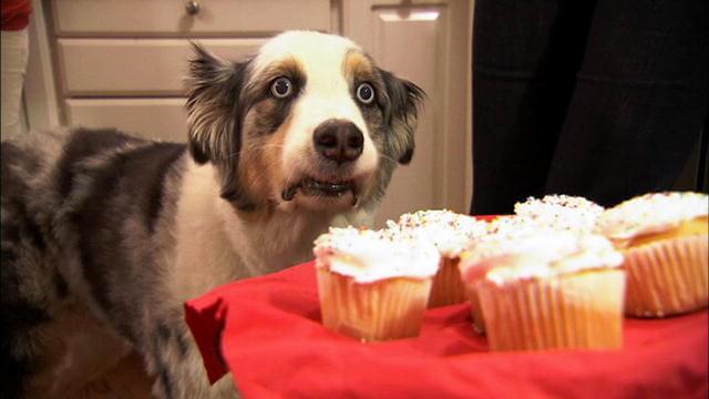 Dog in shock