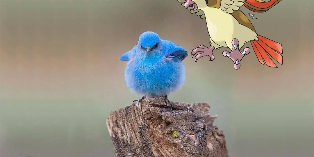 Twitter bird in danger